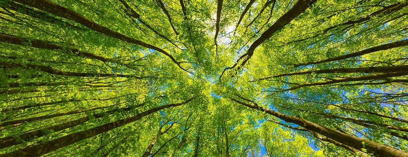 louisville ky tree care
