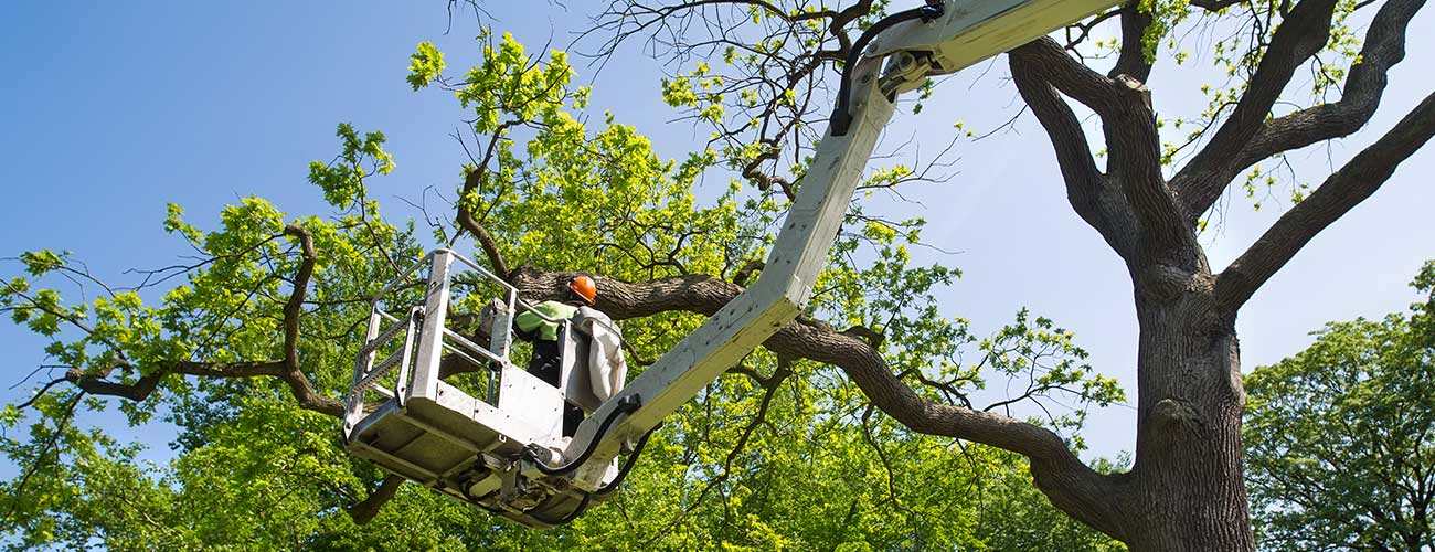 tree trimming service louisville ky